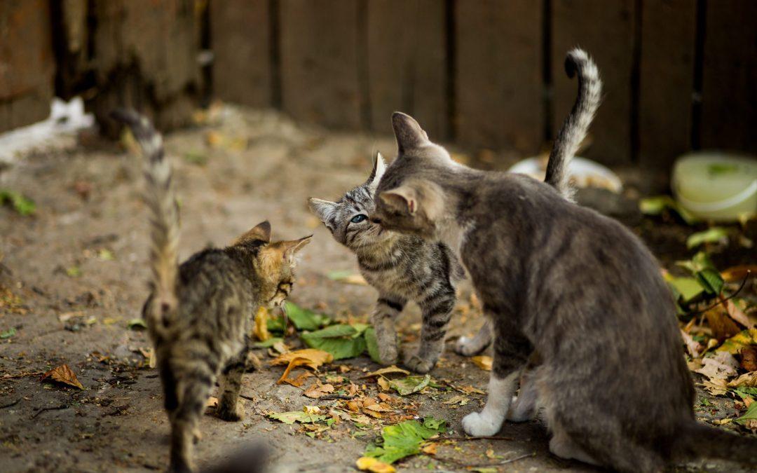 De rangorde bij de kat