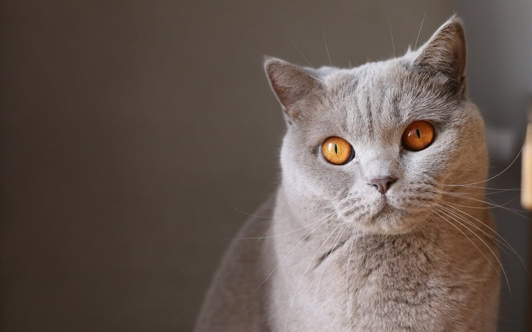 Kat alleen