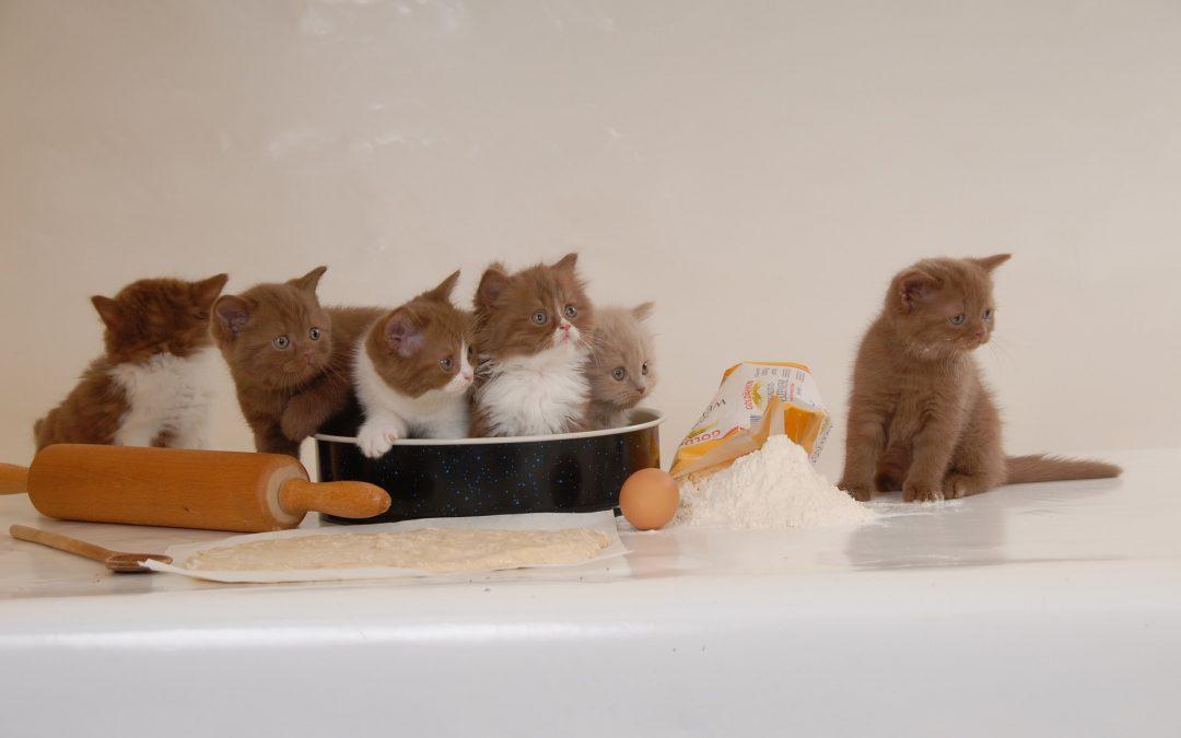 Ontwikkeling eetgedrag kittens