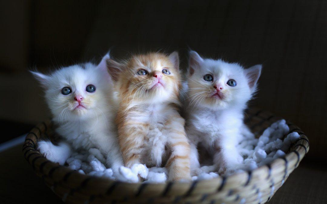 15 redenen om kittens 16 weken bij hun moeder te laten