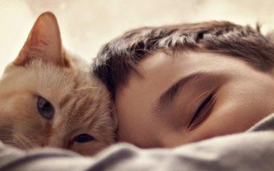 Katten en kinderen