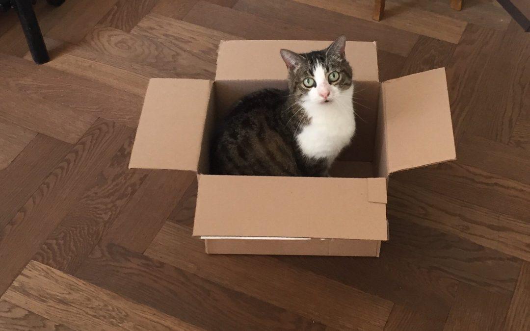Ik ga verhuizen. Hoe help ik mijn kat?