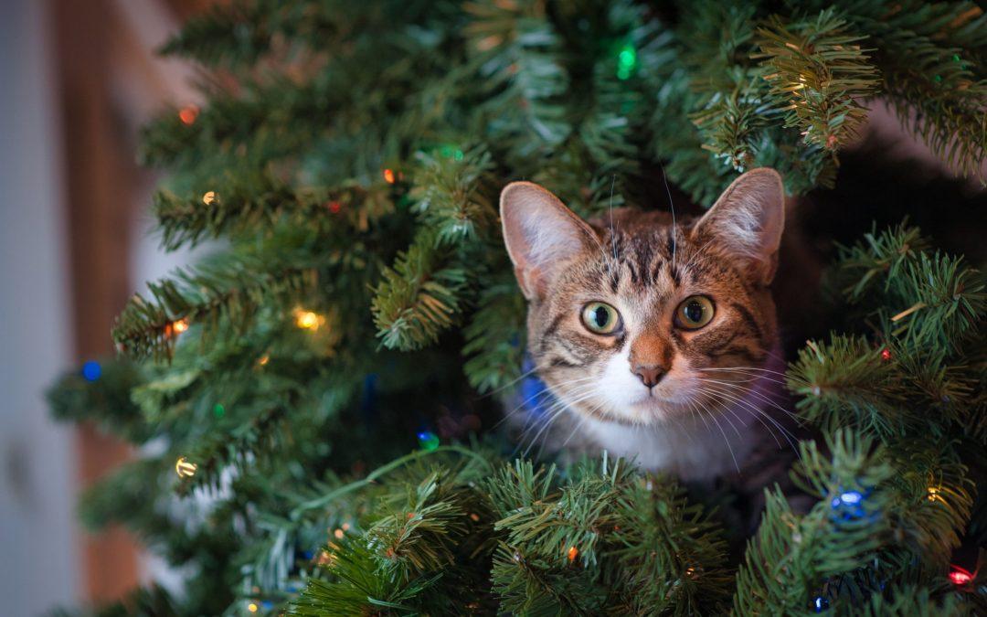 Kat en kerst