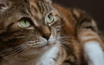 Kattenbaasjes onbekend met oplossingen