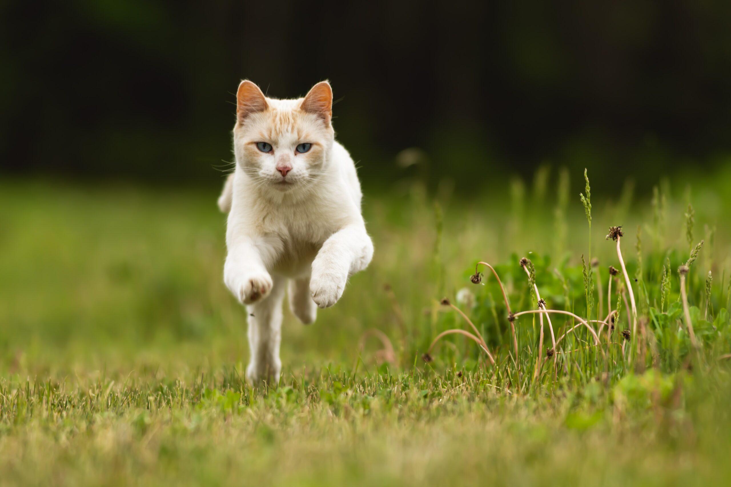 Een jagende kat is een gelukkige kat!