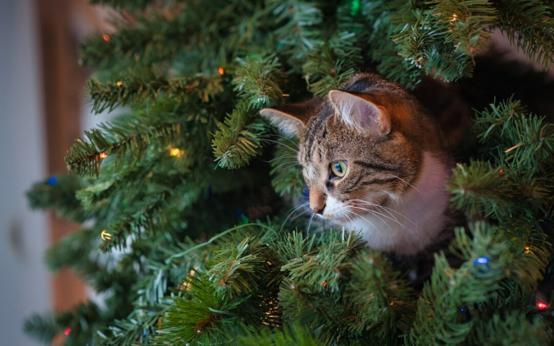 Kat en feestdagen