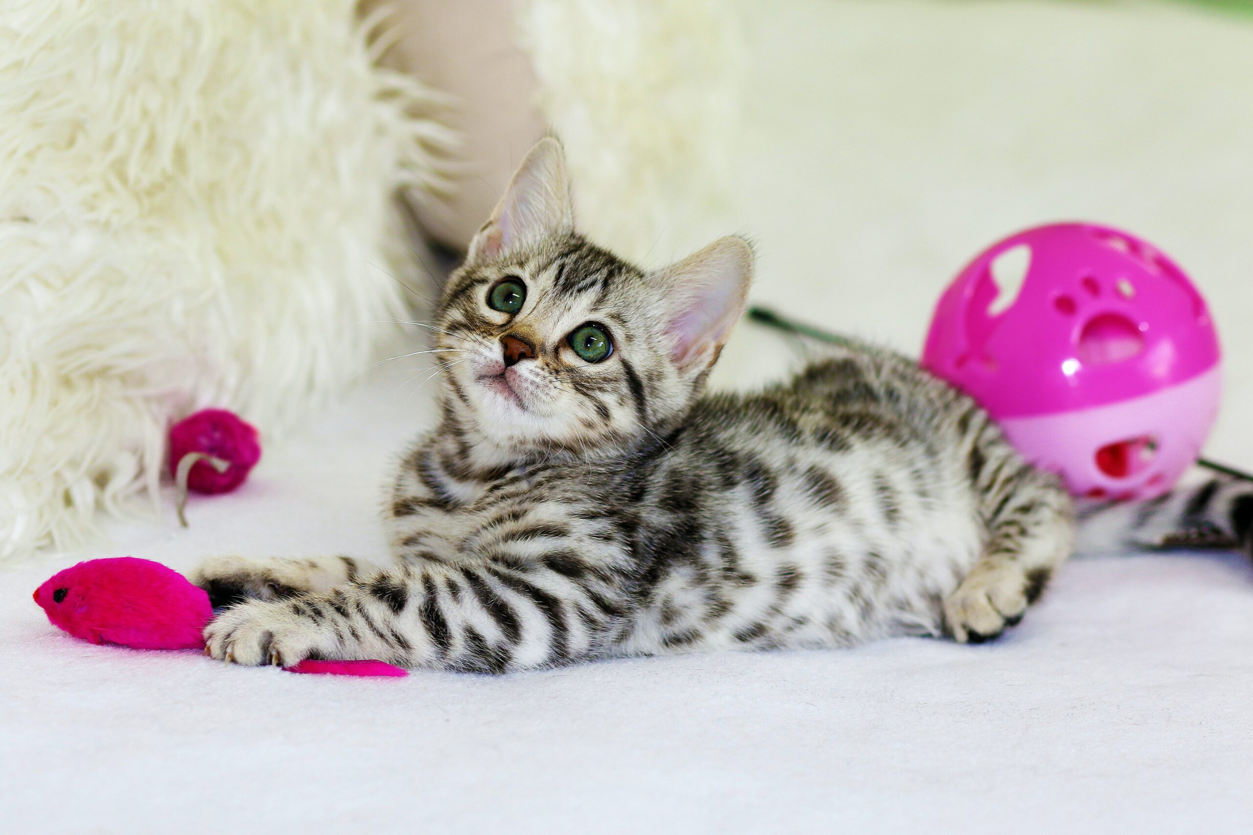 Medische aspecten kittenverzorging