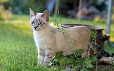 Een katvriendelijke tuin