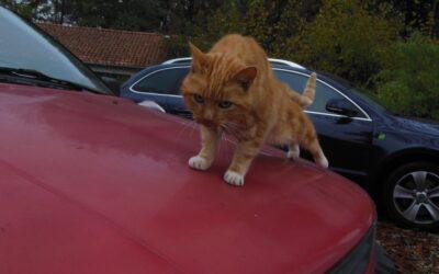 Last van katten die op je auto komen?