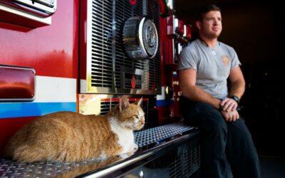 Wel of niet stickers aanwezigheid katten voor Brandweer